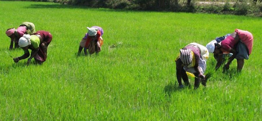GIC, Agriculture, The many challengesa farmer faces when sourcing forbankloan