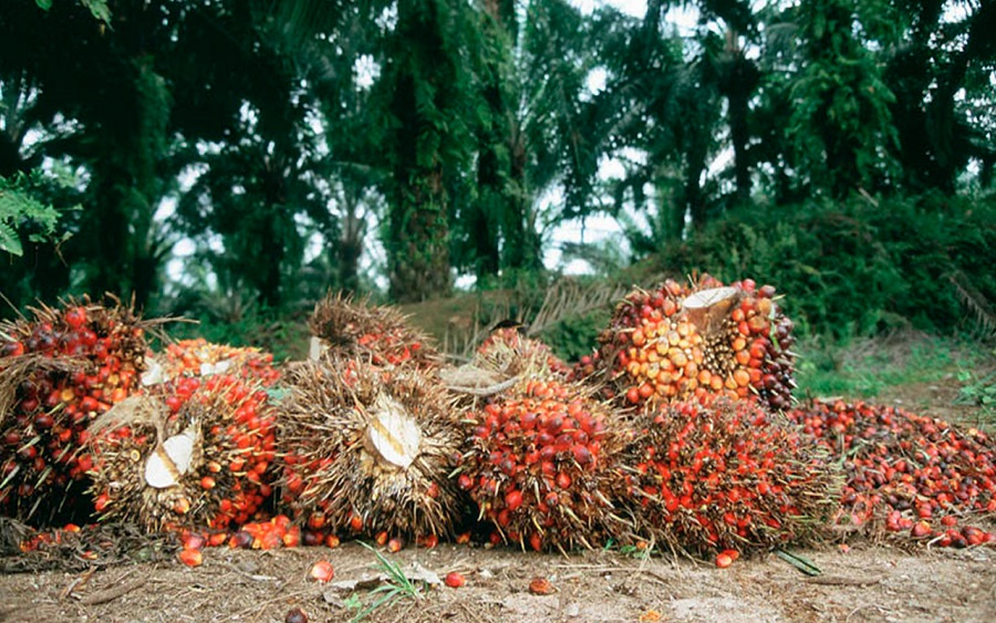 Okomu Oil Palm 's profit declines by 43.22% as at Q3 2019