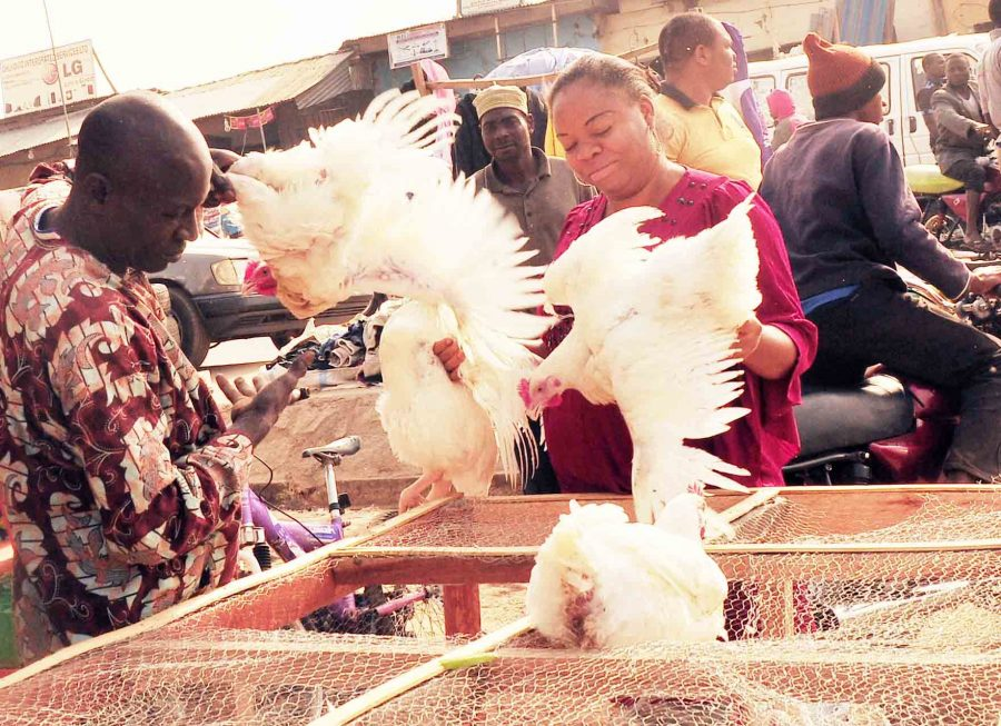 Poultry, Local rice floods major markets in Nigeria, as frozen food sellers lament low patronage