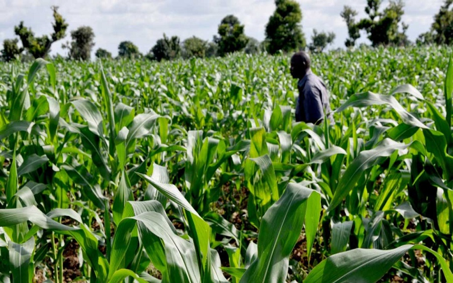 Agricultural financing, GDP: Agriculture grows by 3.42% in Q4 report