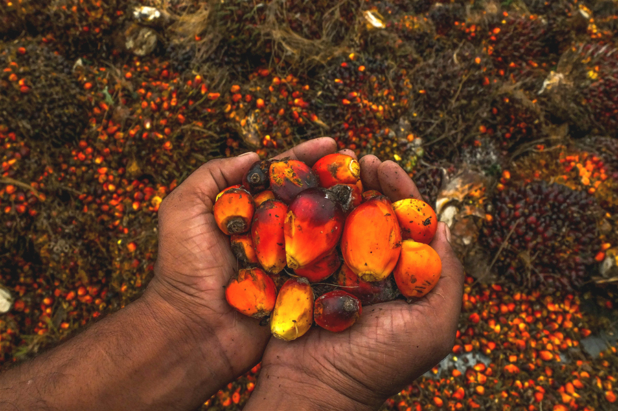 Okomu Oil Palm Company Plc. announces AGM and dividend payment of N2.00 per share