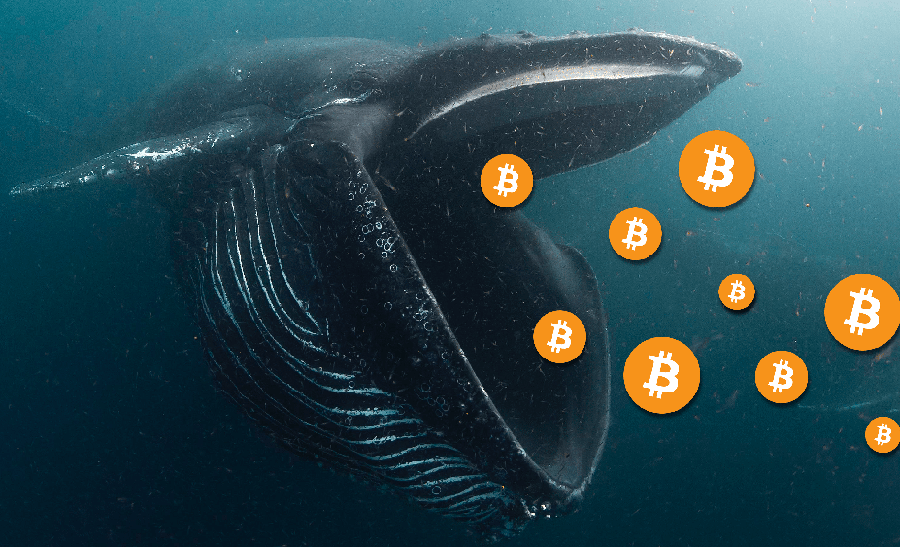 BTC whale steps in to buy larger stacks ofBitcoin,at a discount of $8,850